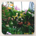 A stunning display of exotic orchids growing coaster