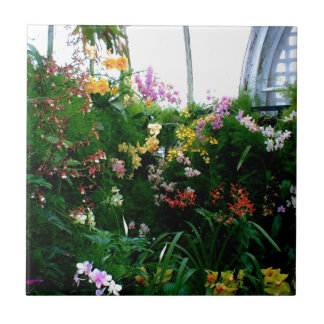 A stunning display of exotic orchids growing ceramic tiles