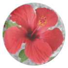 A Stunning Scarlet Hibiscus Tropical Flower Melamine Plate