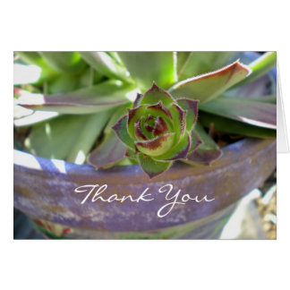 A Succulent Thank You Card
