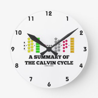 A Summary Of The Calvin Cycle (Photosynthesis) Clocks