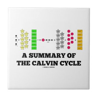 A Summary Of The Calvin Cycle (Photosynthesis) Tiles