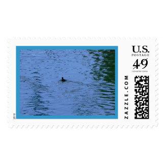 A Summer Swim Stamp