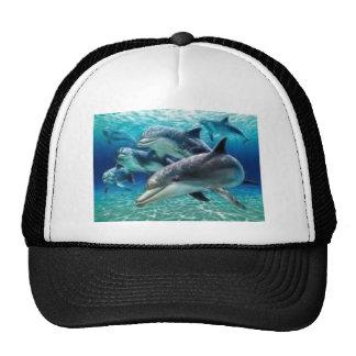 a sun light dolphin mesh hat