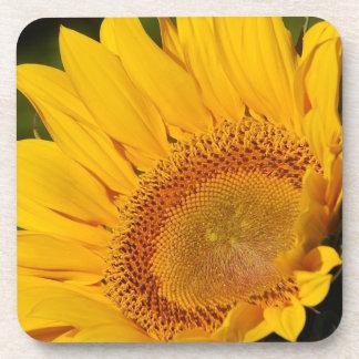 A sunflower close up drink coaster