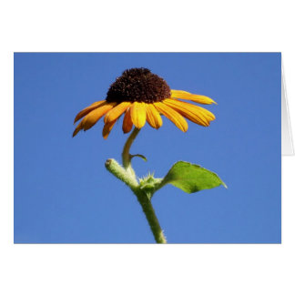 A Sunny Autumn Beauty Sunflower Blossom and Sky Card