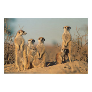 A Suricate family sunning themselves at their den Wood Wall Decor