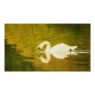 A Swan Poster