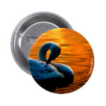 A Swan Taking a Last Minute Swim at Sunset 2 Inch Round Button