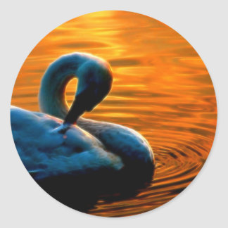 A Swan Taking a Last Minute Swim at Sunset Round Stickers