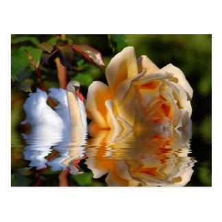 A Swans Rose Postcard