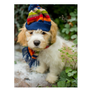 A Sweet Cavachon Puppy In A Winter Hat And Scarf Postcard