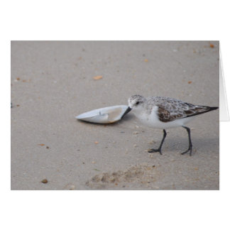 A Sweet Little Sanderling Greeting Card