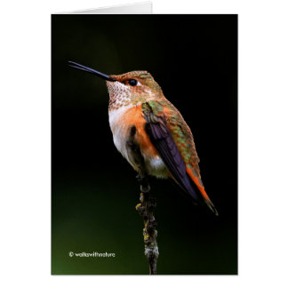 A Sweet Rufous Hummingbird Poses on the Fruit Tree Card