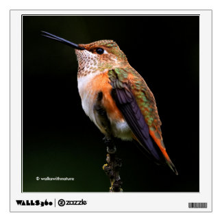 A Sweet Rufous Hummingbird Poses on the Fruit Tree Wall Decal