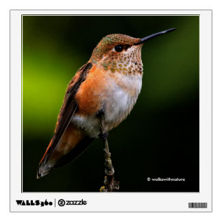 A Sweet Rufous Hummingbird Poses on the Fruit Tree Wall Sticker
