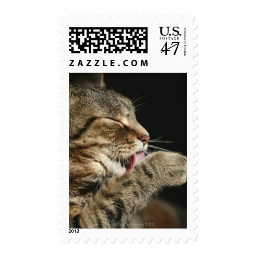 A tabby cat licking his paw. stamp