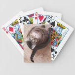 A tabby cat looking up bicycle playing cards