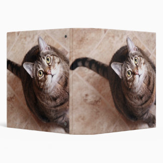 A tabby cat looking up 3 ring binders