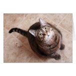 A tabby cat looking up card