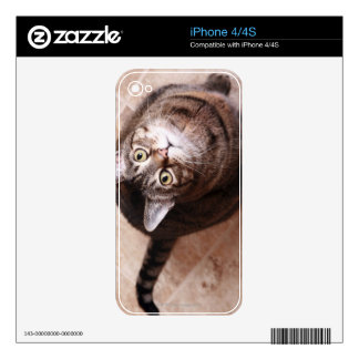 A tabby cat looking up iPhone 4S decal