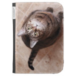 A tabby cat looking up kindle cases