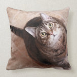 A tabby cat looking up pillow