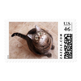 A tabby cat looking up stamp