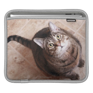A tabby cat looking up sleeves for iPads