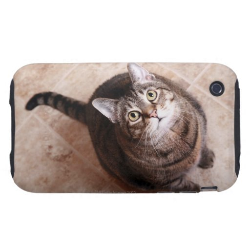 A tabby cat looking up tough iPhone 3 cases