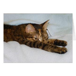 A Tabby Cat Stretching Felis Silvestris Catus Card