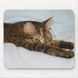 A Tabby Cat Stretching Felis Silvestris Catus Mouse Pad