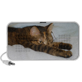 A Tabby Cat Stretching Felis Silvestris Catus Notebook Speaker