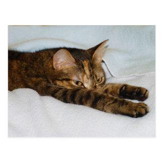 A Tabby Cat Stretching Felis Silvestris Catus Postcard