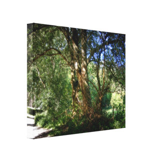 A Tale To Tell Canvas Print
