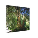 A Tale To Tell Stretched Canvas Prints