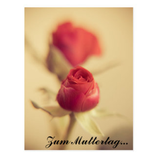 A talk rose for the mother… postcard
