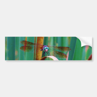 A teal Eyed Dragonfly with cattails Bumper Sticker