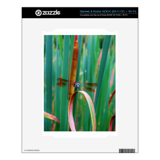 A teal Eyed Dragonfly with cattails NOOK Skin
