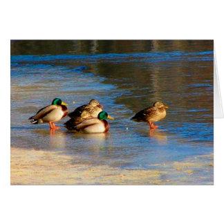 A Team Of Ducks Card