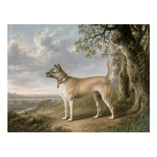 A Terrier on a path in a wooded landscape Postcard