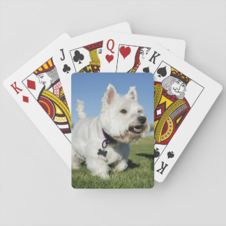 A Terrier playing out in the field Poker Cards