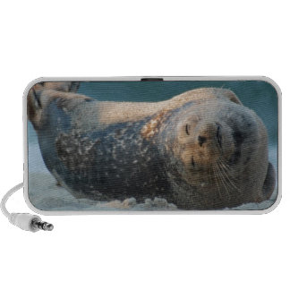 A thing for seals travel speaker