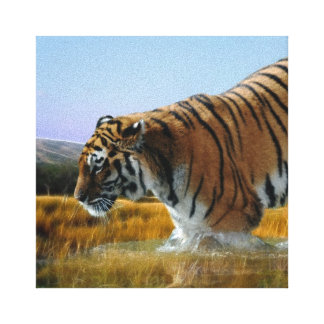 A Tiger loves water Canvas Print