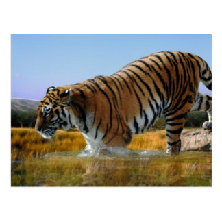A Tiger loves water Postcard