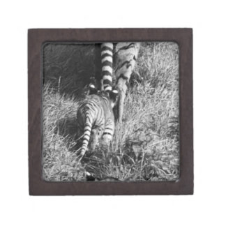 A tiger with her two cubs at Whipsnade Zoo. Jewelry Box