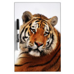 A tigers side glance Dry-Erase boards