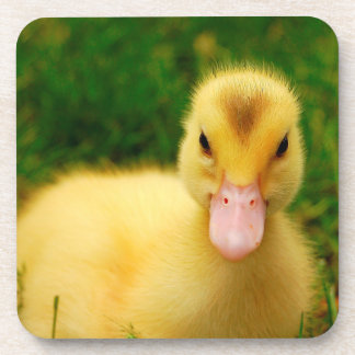 A Tiny Duckling Beverage Coaster