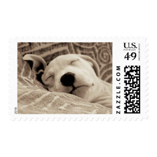 A Tired Dog Postage