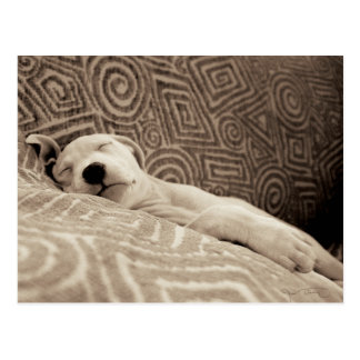 A Tired Dog Postcard